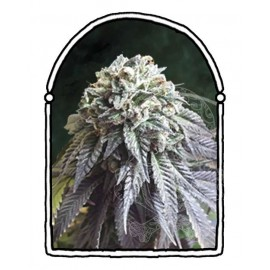 The Kush Brothers - The Dark Side (1f)