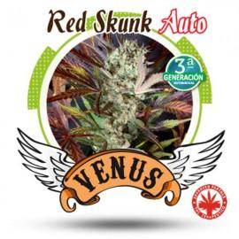Venus Genetics - Red Skunk Auto (3f)