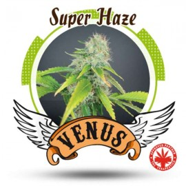 Venus Genetics - Super Haze (3f)