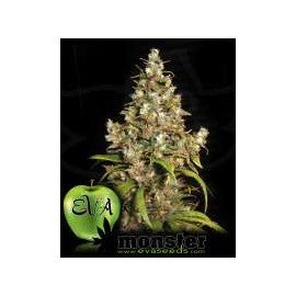 Eva Female Seeds - Monster (3f)