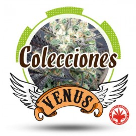 Venus Genetics - Coleccion Autos