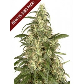 Dutch Passion - Skunk nº 11 (3f)